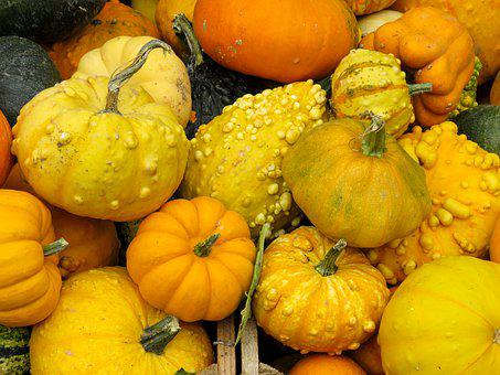 Eat, Food, Pumpkin, Autumn, Vegetables, Healthy