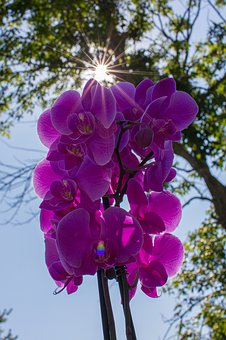 Orchid, Purple, Flower, Bloom, Blossom, Plant, Exotic