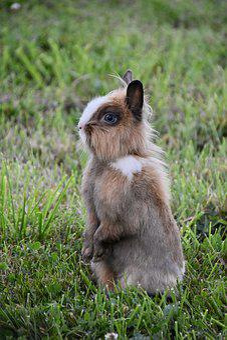 Rabbit, Rabbit Standing Position, Rabbit Blue Eyes
