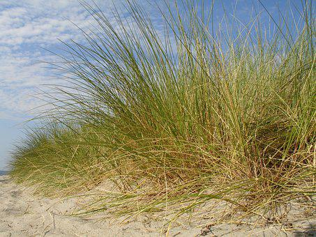 Sand, Summer, Vacations, Water, Sea, Travel, Landscape