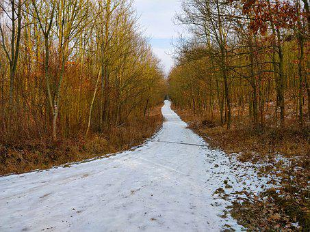 Path, Forest, Snowy, Snow, Winter, Cold, Nature, White