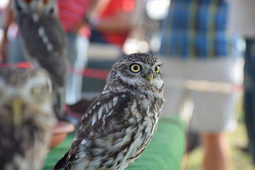 Owl, Bird, Feather, Animals, Bird Of Prey, Plumage