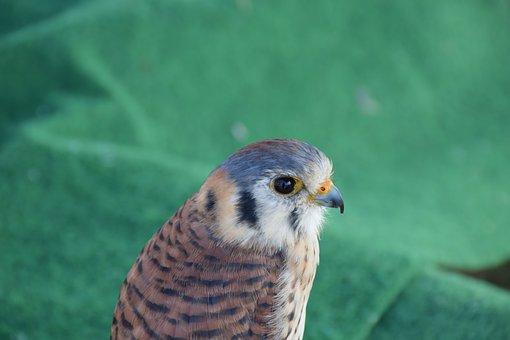 Bird, Feather, Animals, Bird Of Prey, Plumage, Birds