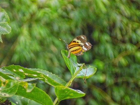 Butterfly, Green, Nature, Butterflies, Animal, Grass