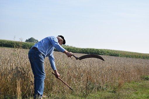 Agriculture, Harvest, Farmer, Scythe, Corn, Food