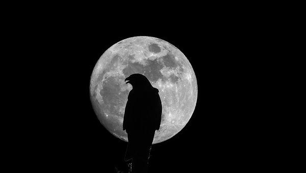 Eagle, Moon, Majestic, Mystical, Fantasy, Landscape
