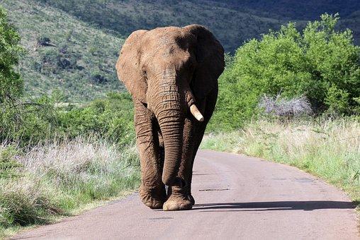 Elephant, On The Road, Walking, Landscape, Sun