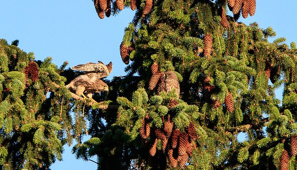Kestrels, Raptor, Falcon, Kestrel, Bird Of Prey, Bird