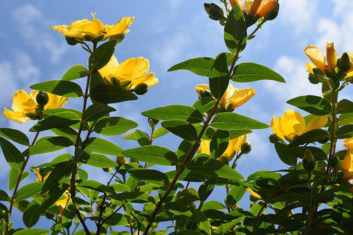 Flowers, Growing, Yellow, Nature, Plant, Grow