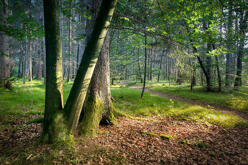 Log, Trees, Forest, Wood, Nature, Autumn, Forest Floor
