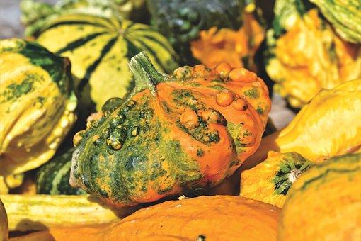 Pumpkin, Fruit, Autumn, Cucurbita Maxima, Choose, Food