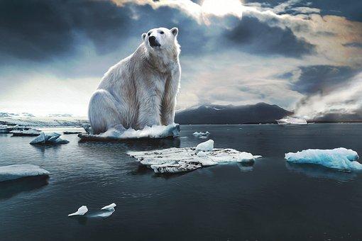 Polar Bear, Glacier, Cruise Ship, Ice, Blue, Threat