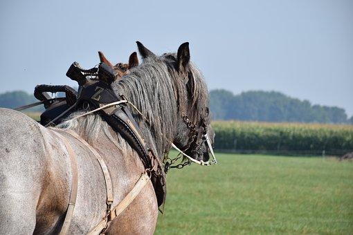 Horse, Team, Farmer, Teams, Horses, Field, Agriculture