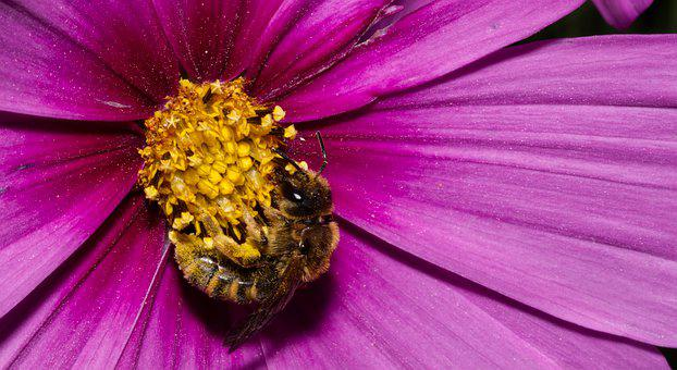 Flower, Blossom, Bloom, Pollen, Bee, Insect, Nature