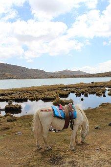 Horse, Laguna, Landscape