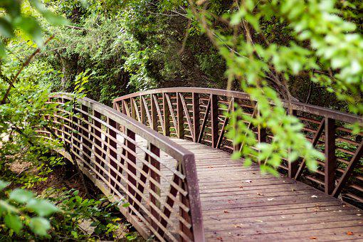 Bridge, Nature, Summer, Landscape, Forest, Pathway