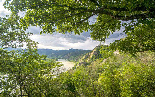 River, Tree, Trees, Nature, Water, Landscape, Stream