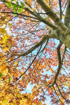 Tree, Fall, Uplight, Leaves, Branches, Autumn