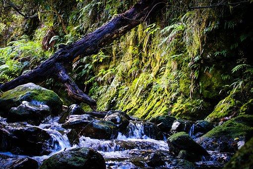 Moss, Creek, Water, Rocks, Flowing, Landscape, Stream