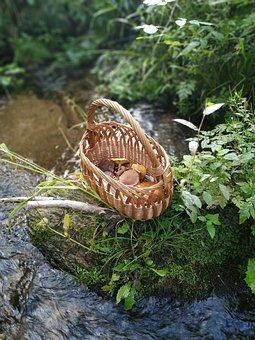Mushrooms, Fungus, Mushroom Picking, Boletus, Basket