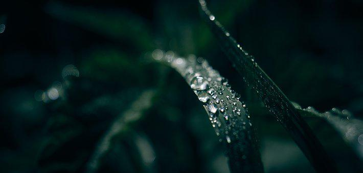 Dew, Grass, Drop Of Water, Nature, Dewdrop, Close Up