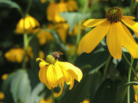 Summer, Bee, Nature, Yellow, Green, Plant, Flower Bed