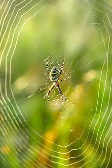 Spider, Web, Cobweb, Nature, Close Up, Cobwebs, Animal