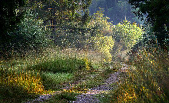 Forest, Glade, Away, Path, Mystical, Atmosphere, Mood