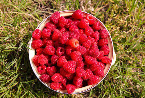 Raspberries, Raspberry, Fruits, Fruit, Food, Berry
