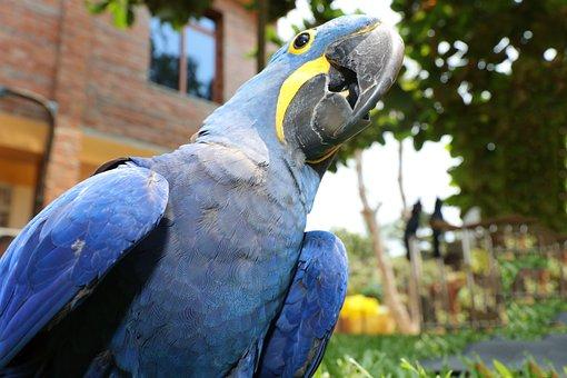 Colorful Couple Macaws, Parrot, Bird, Macaws, Sank