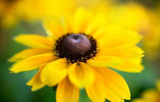 Coneflower, Blossom, Bloom, Summer Flower, Shrub