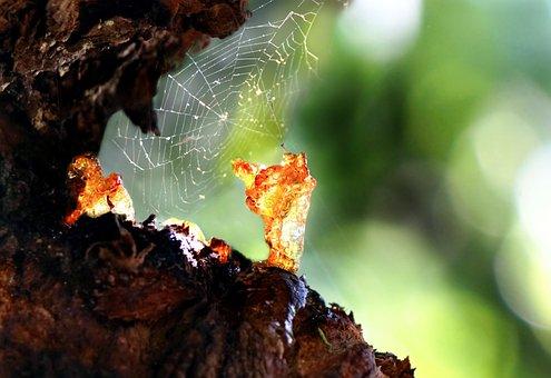 Resin, Bitumen, Tree, Close Up, Resin Discharge, Tribe