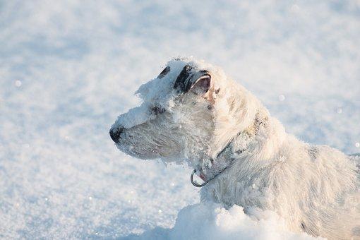 Dog, Snow, Winter, Cold, Frozen, Pet, Animal