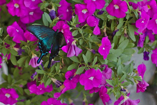 Butterfly, Flowers, Wings, Colorful, Nature, Blue