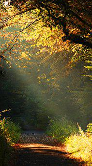 Nature, Flora, Late Summer, Autumn, Sun, Leaves, Forest