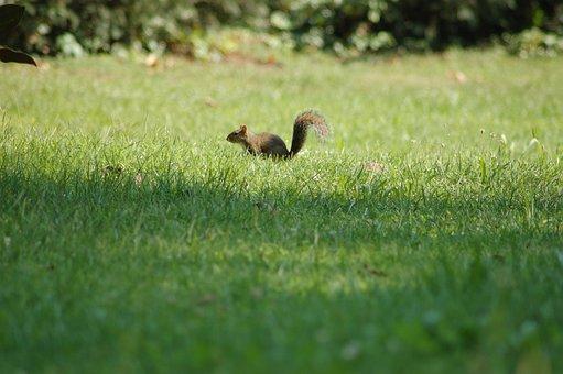 Squirrel, Rodent, Cute, Fur, Tail, Wild, Mammal, Small