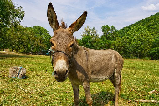 Donkey, Monastery Of Krka, Animal, Landscape