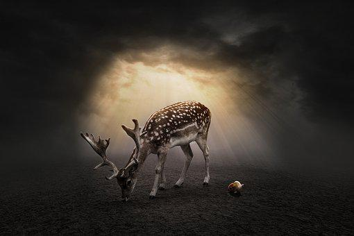 Deer, Lonely, Nature, Wild, Cute, Animal, Sunset