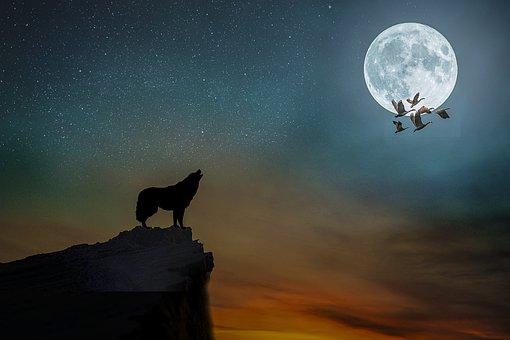 Manipulation, Wolf, Moon, Full Moon, Sky, Stars, Geese