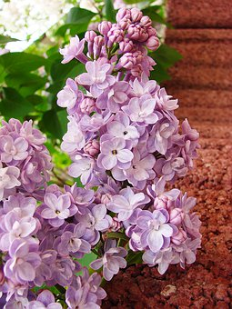Without, Violet, Flower, May, Spring, Bush, Nature
