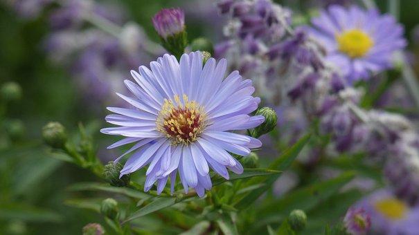 Blue, Flower, Bloom, Nature, Blossom, Bloom, Plant