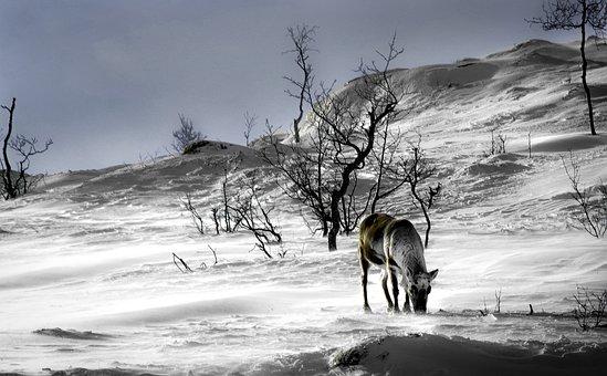Norway, It, Landscape, Scandinavia, Winter, Mountain