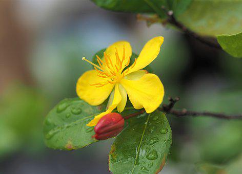 Small Yellow Flower, Wild, Nature, Natural, Outdoor