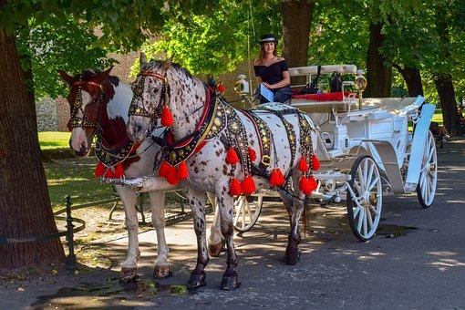 Carriage, Horses, Girl, Square, Park, Tourism