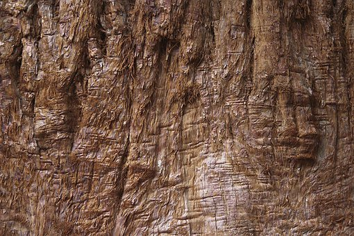 Texture, Tree, Wood, Background, Structure, Log, Forest