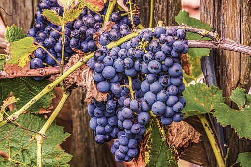 Grapes, Fruit, Vine, Table Grapes, Food, Agriculture