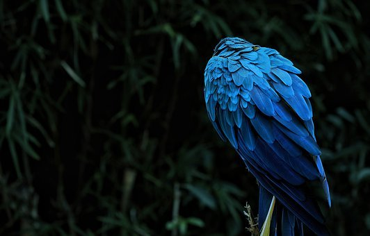 Macaw, Animal, Bird, Parrot, Feather, Exotic, Color