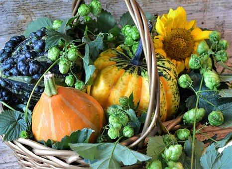 Pumpkins, Hops, Ornamental Pumpkin, Colorful, Autumn