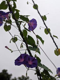 Flower, Blossom, Nature, Bloom, Plant, Pink, Petals