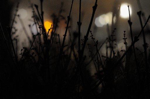 Dark, Plants, Shadow, Silhouette, Nature, Lights, Blur